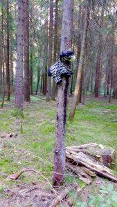 Zebras, die auf Bäume steigen - sieht man nur bei uns ;)